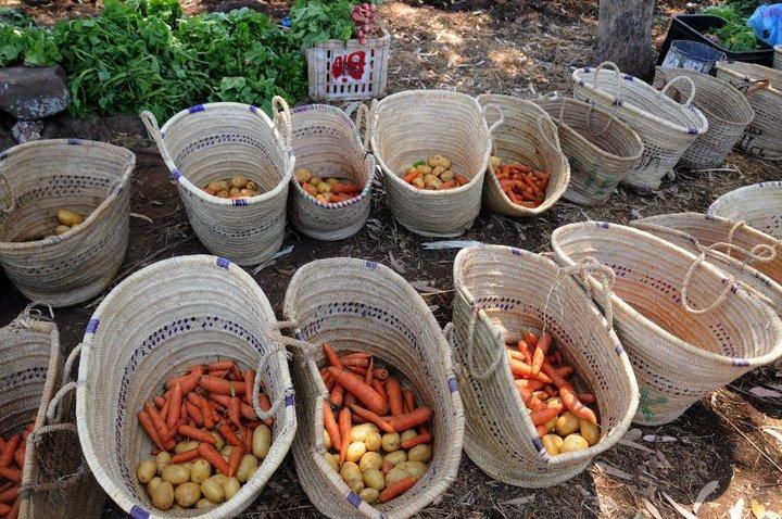 Les paniers bio sont prêts à etre livrés à Darbouazza
