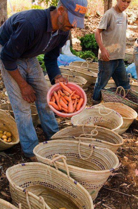 Préparation des paniers bio avec les paysans